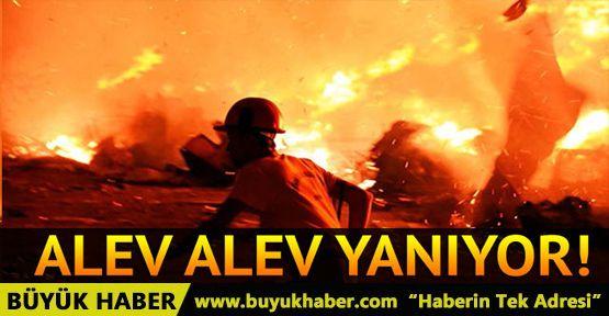 Bodrum'da korkutan çöplük yangını