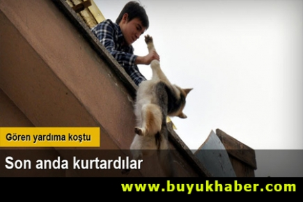 Çatıda asılı kalan köpeği kurtardılar