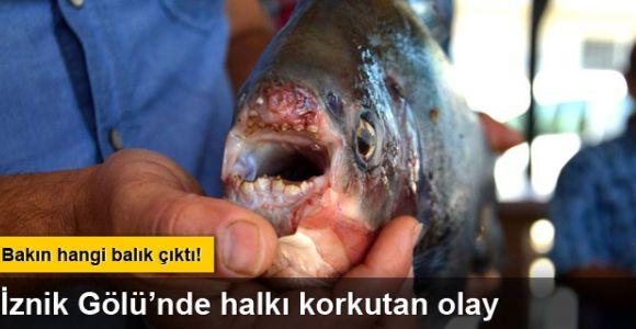 İznik Gölü'nde 2.5 kilo ağırlığında pirana avlandı