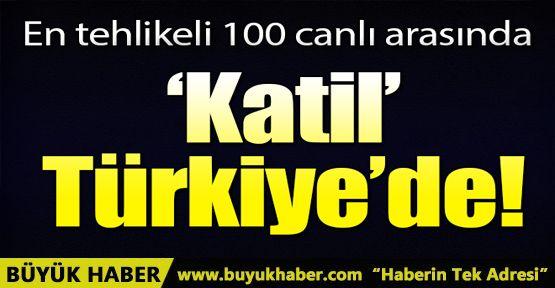 Katil salyangoz Türkiye'de