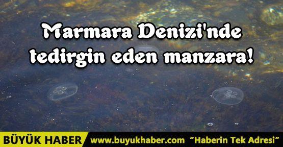 Marmara Denizi'nde tedirgin eden manzara!