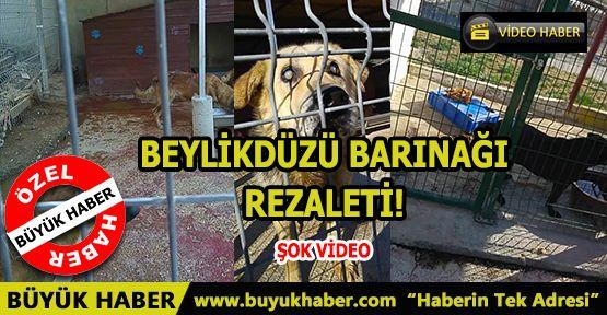 BEYLİKDÜZÜ BARINAĞI REZALETİ!
