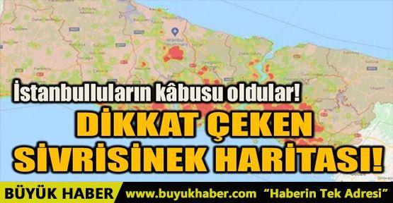 İstanbul'da sivrisinek alarmı