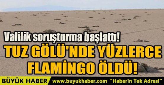 TUZ GÖLÜ'NDE YÜZLERCE FLAMİNGO ÖLDÜ!